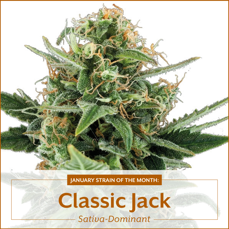 classic-jack-blog